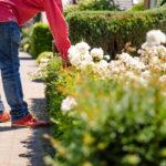 Garten im Frühling: Die wichtigsten Arbeiten