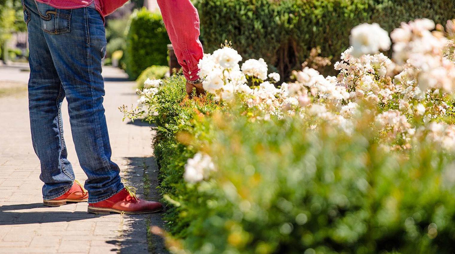 Garten im Frühling: blühende Pflanzen