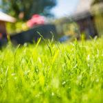 Tipps zur Auswahl der richtigen Rasensaat