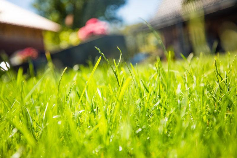Rasensaat: grüner Rasen im Vordergrund
