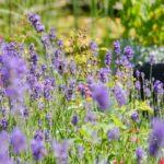 Bienenfreundlicher Garten: Ideen und Tipps